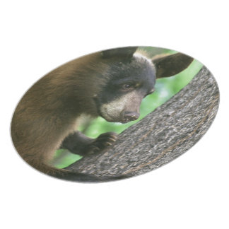 Oso negro en las maderas platos de comidas