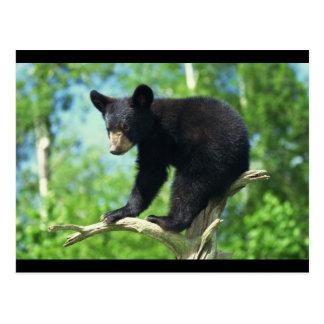 Oso negro encima de un árbol postales