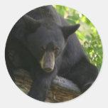 oso negro etiquetas redondas