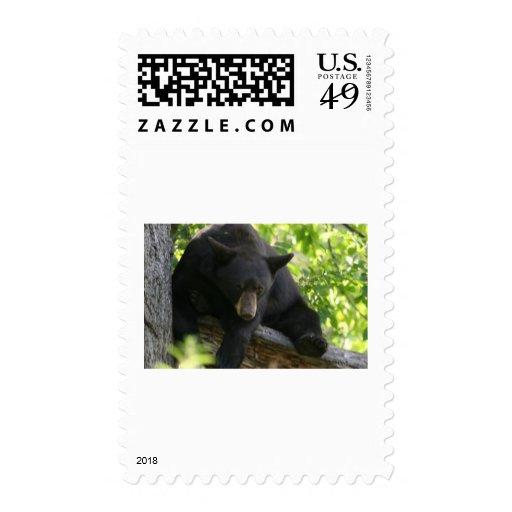 oso negro franqueo