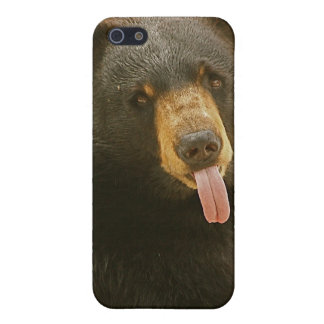 Oso negro iPhone 5 protector