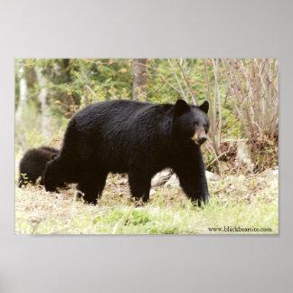 oso negro grande póster