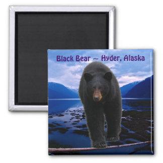 OSO NEGRO Hyder, imán de la fauna de Alaska