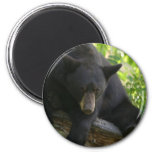 oso negro imán para frigorifico