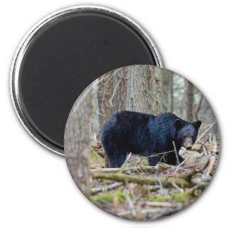 Oso negro imán redondo 5 cm