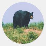 oso negro pegatina redonda
