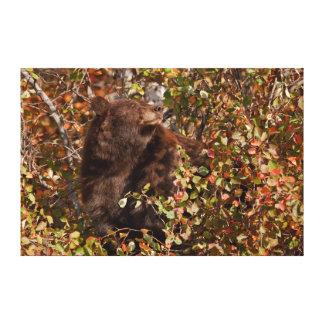 Oso negro que busca para las bayas del otoño impresion en lona