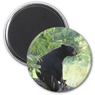 oso negro que se sienta en árbol imán para frigorifico