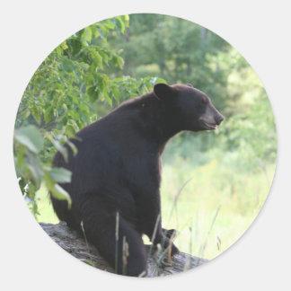oso negro que se sienta en árbol pegatina redonda