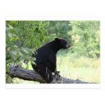 oso negro que se sienta en árbol postal