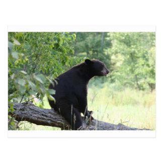 oso negro que se sienta en árbol postales