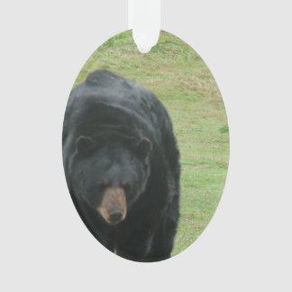 Oso negro salvaje