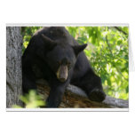 oso negro tarjeton