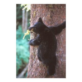 oso negro, Ursus americanus, cachorro en árbol, Impresiones Fotográficas