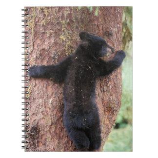 oso negro, Ursus americanus, cachorro en el árbol, Libretas