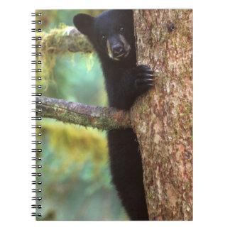 oso negro, Ursus americanus, cachorro en el árbol, Libro De Apuntes Con Espiral