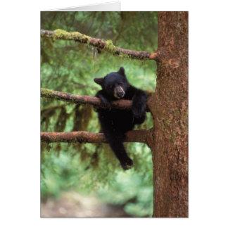 oso negro, Ursus americanus, cachorro en un árbol Tarjeta De Felicitación