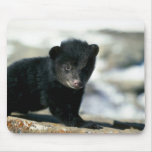 Oso-pequeño cachorro negro alfombrilla de ratón
