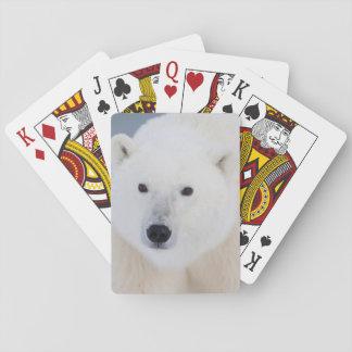 Oso polar baraja de póquer