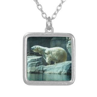 Oso polar: Berlín Collar Plateado