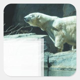 Oso polar: Berlín Pegatina Cuadrada