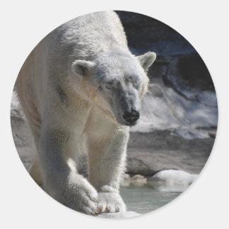 Oso polar blanco lindo pegatina redonda