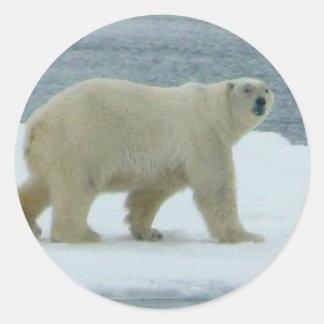 Oso polar blanco pegatina redonda