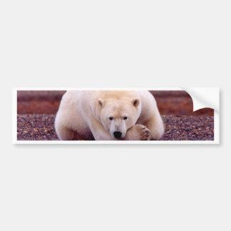 Oso polar etiqueta de parachoque