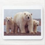 Oso polar con Cubs 02 Tapete De Ratones