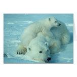 Oso polar con el cachorro tarjeton