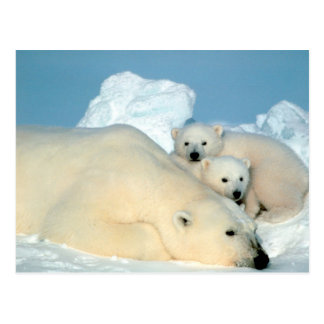 oso polar con la postal de los cachorros