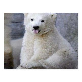 Oso polar Cub Postales