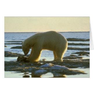 Oso polar de itinerancia tarjeta de felicitación