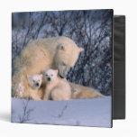 Oso polar de la madre que se sienta con los gemelo