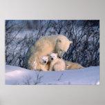 Oso polar de la madre que se sienta con los gemelo póster