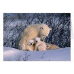 Oso polar de la madre que se sienta con los gemelo tarjeta de felicitación