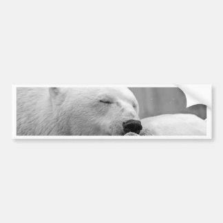 Oso polar de reclinación pegatina de parachoque