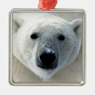 Oso polar ornamente de reyes