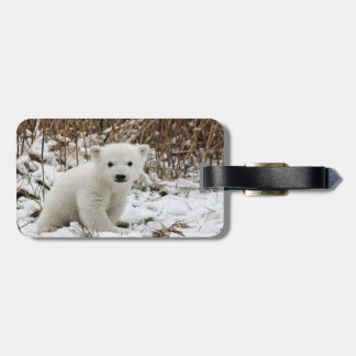 Oso polar del bebé etiqueta para equipaje