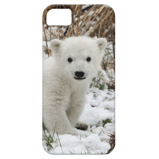Oso polar del bebé funda para iPhone SE/5/5s
