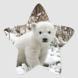 Oso polar del bebé pegatinas forma de estrellaes personalizadas