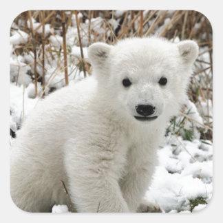 Oso polar del bebé pegatina cuadrada