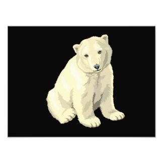Oso polar del bebé arte fotografico