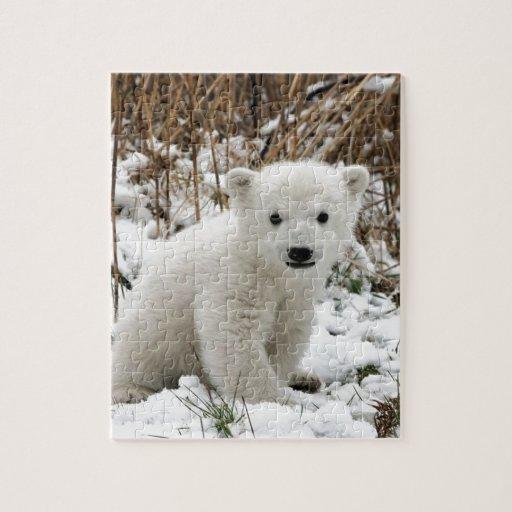 Oso polar del bebé puzzle con fotos