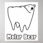 Oso polar del diente del oso molar impresiones