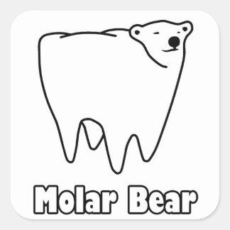 Oso polar del diente del oso molar pegatina cuadrada