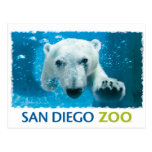 Oso polar del parque zoológico de San Diego Tarjeta Postal