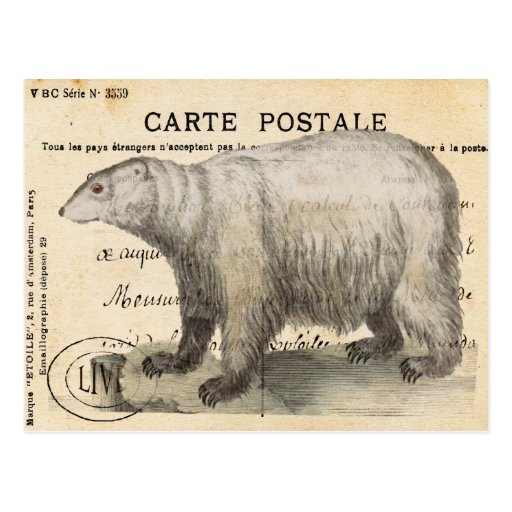 Oso polar del vintage postal