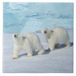 Oso polar, dos tazas en el hielo de paquete, Ursus Teja Cerámica