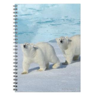 Oso polar, dos tazas en el hielo de paquete, Ursus Libretas